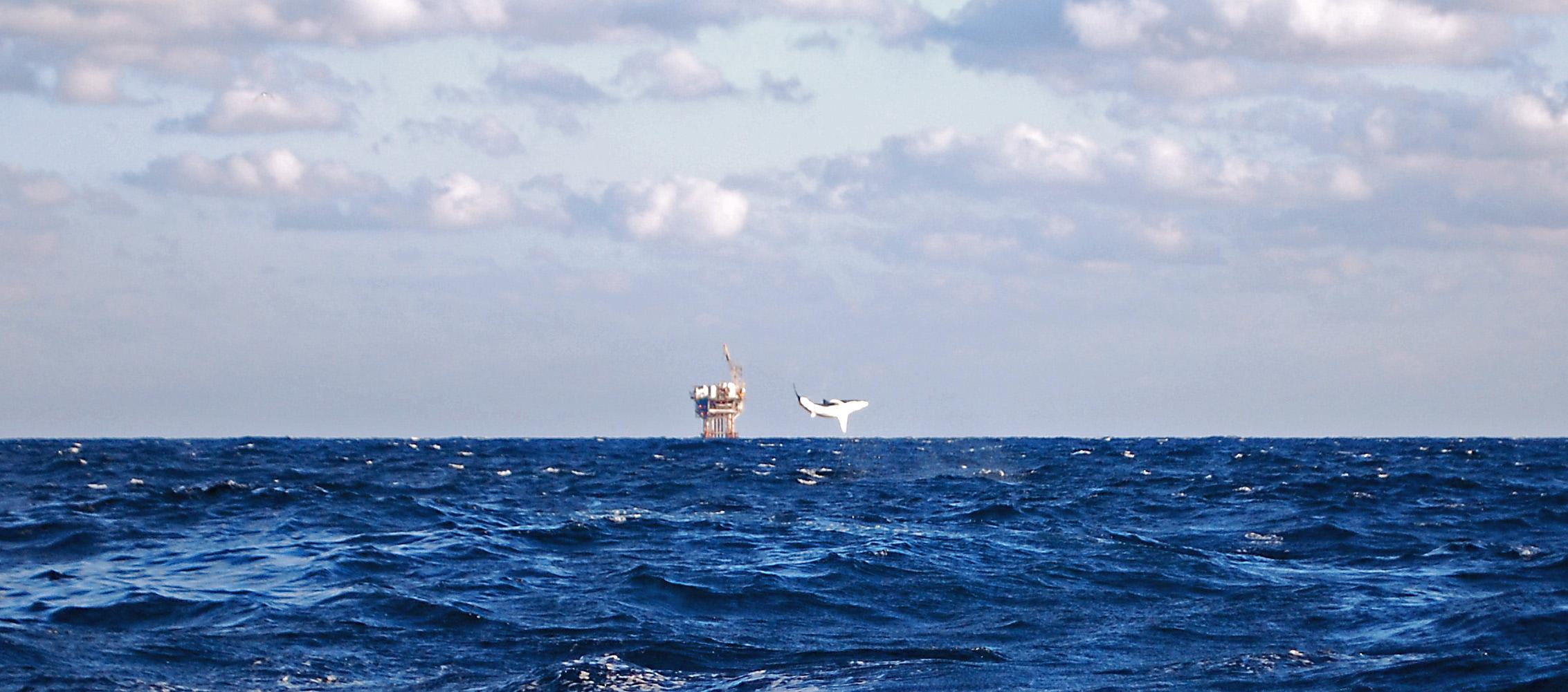 Offshore Venice-Pelagic update.-dsc_0553_edited-jpg