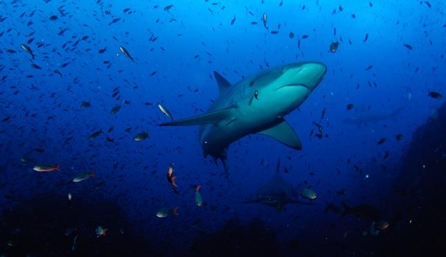 Close encounter with a Hammerhead Shark-dsc_0865-jpg