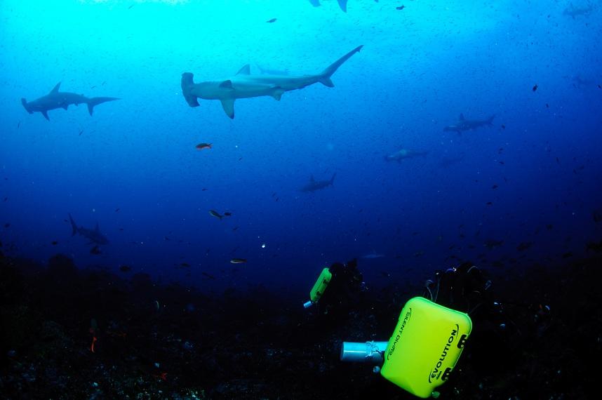 Close encounter with a Hammerhead Shark-dsc_0870-jpg