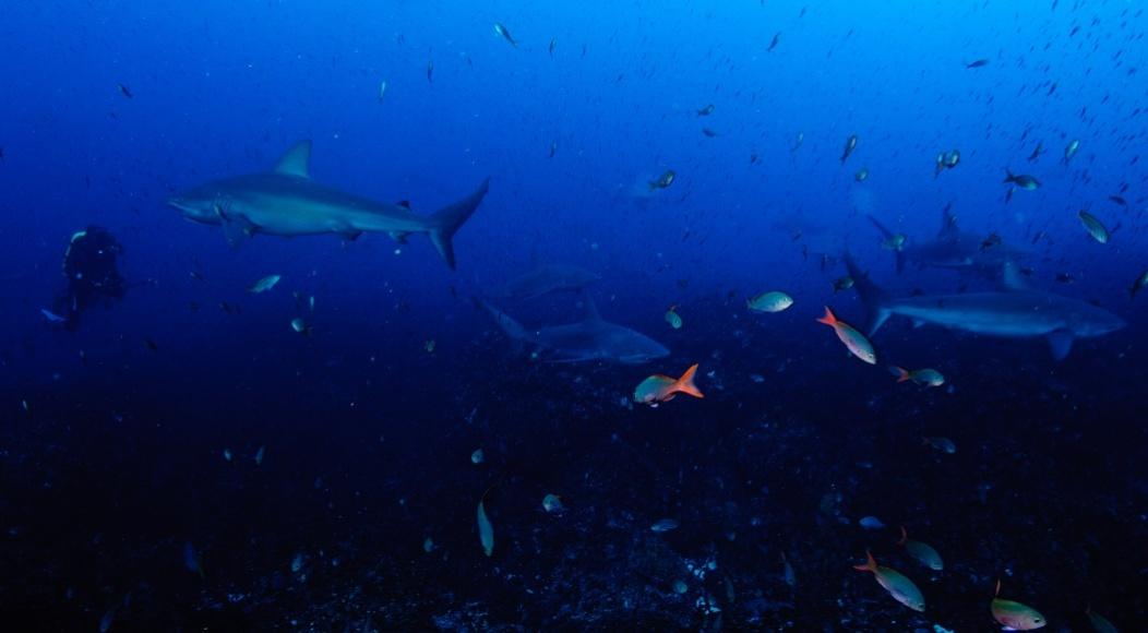 Close encounter with a Hammerhead Shark-dsc_0874-jpg