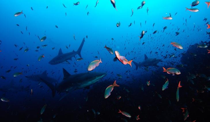 Close encounter with a Hammerhead Shark-dsc_0948-jpg