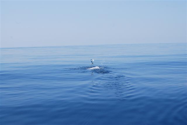 Pelagic Charters-Venice Offshore- More Pics-dsc_1035-small-jpg