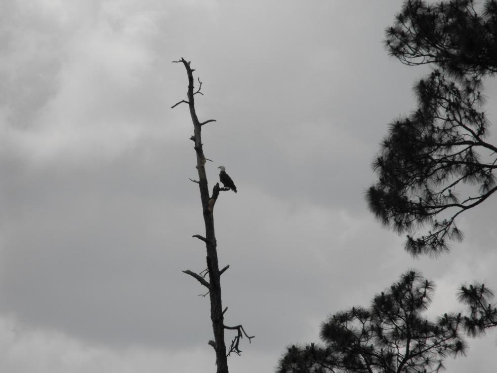 Eagles of Blackwater-dscf0260-jpg