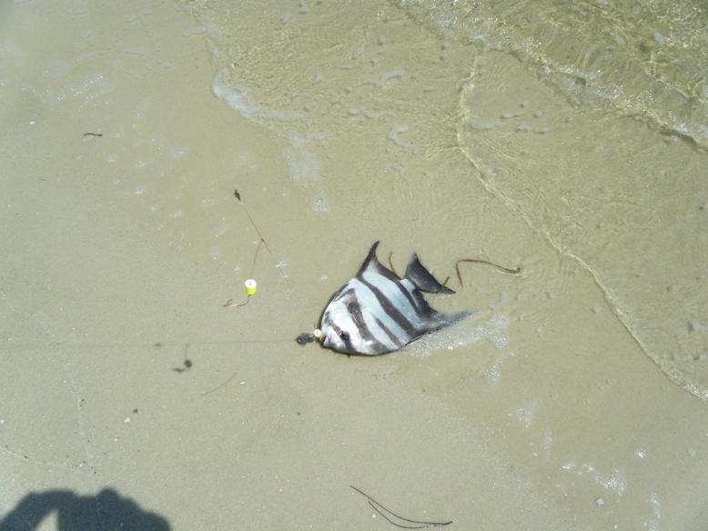 Fish ID Help-dscf1800-jpg