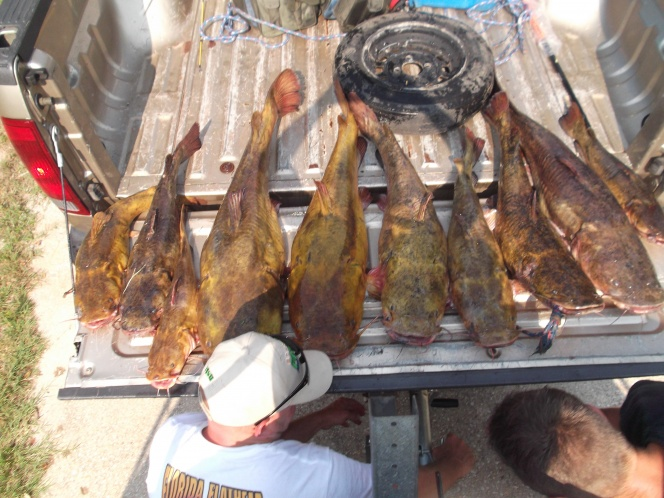 Over 140lbs of Flathead catfish-dscf6032-jpg