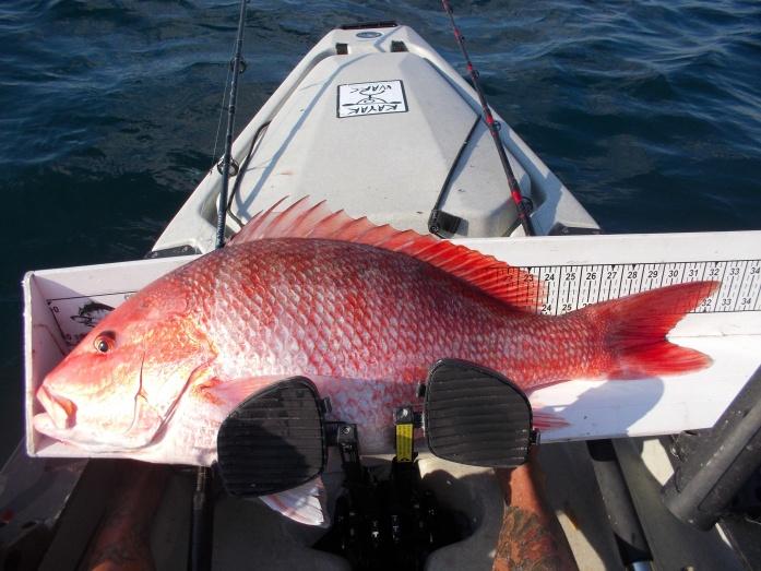 New Kayak Wars Red Snapper record-dscn0131-jpg