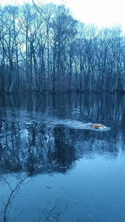 Mississippi Duck Hunting-duck-5-jpg