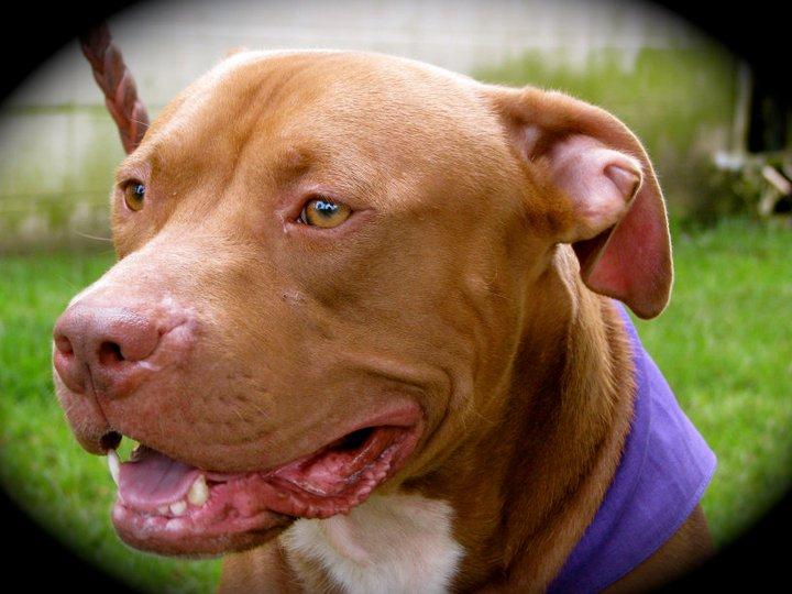 Dog up for Adoption-dutch-jpg