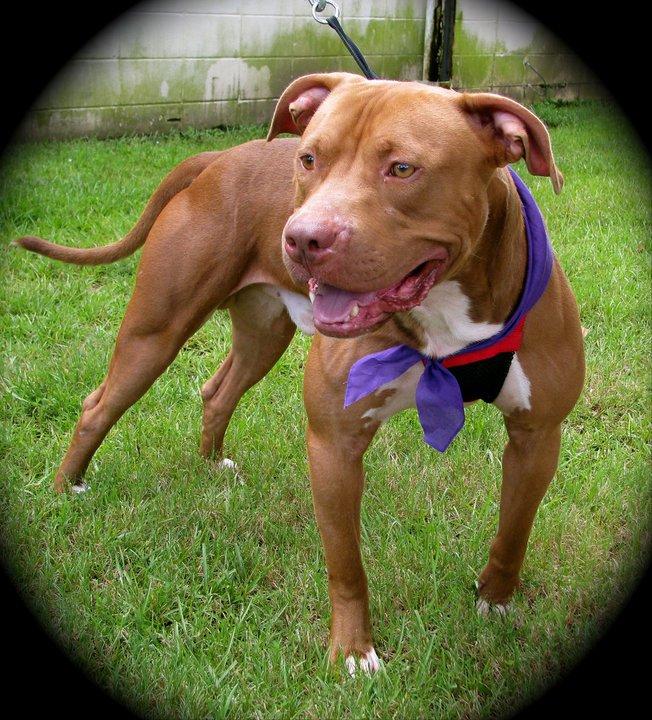 Dog up for Adoption-dutch1-jpg
