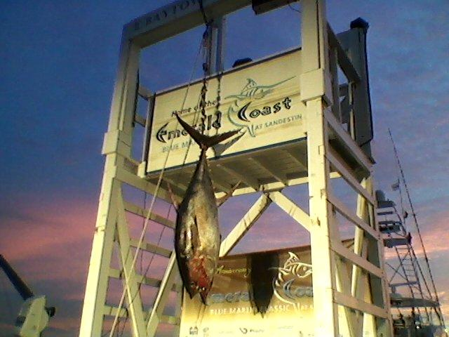 Video of 783# Blue Marlin weighed at ECBC-ecbc-testing-water-190-tuna-jpg