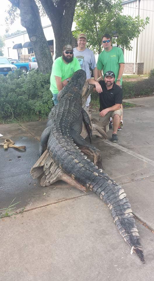 A True Florida Gator-fb_img_1440540219074-jpg