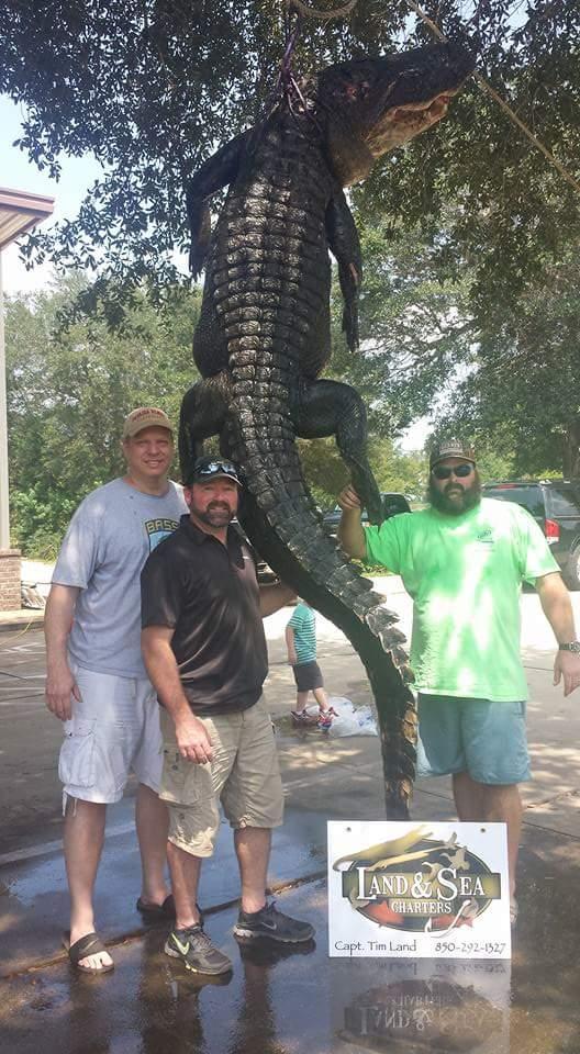A True Florida Gator-fb_img_1440540240702-jpg