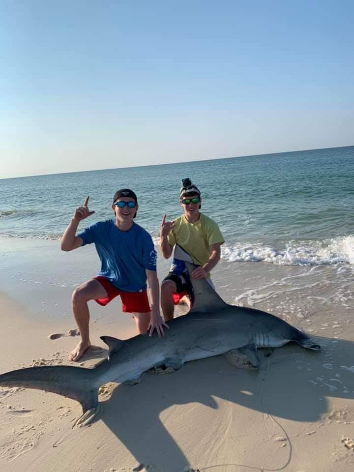 Hammerhead caught on Johnson beach-fb_img_1560261409107_1560267318821-jpg