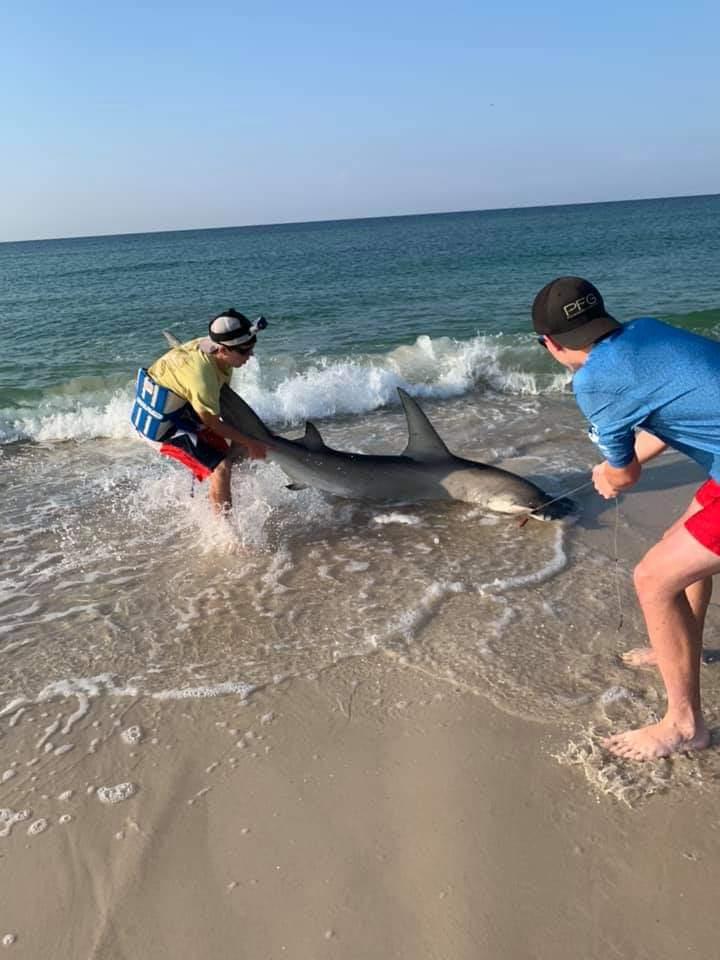 Hammerhead caught on Johnson beach-fb_img_1560261460107_1560267332978-jpg
