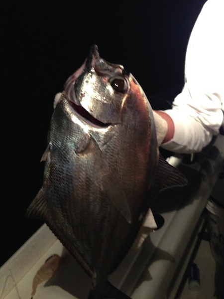 What is this fish??-fish-jpg