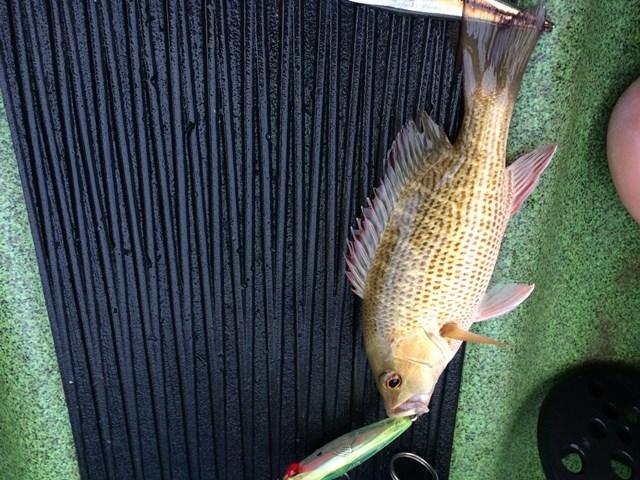 fish ID-fish-jpg