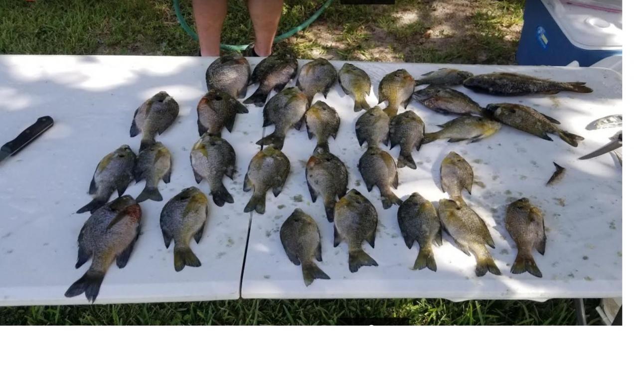 Choctawhatchee bream 9-22-18-fish1-jpg