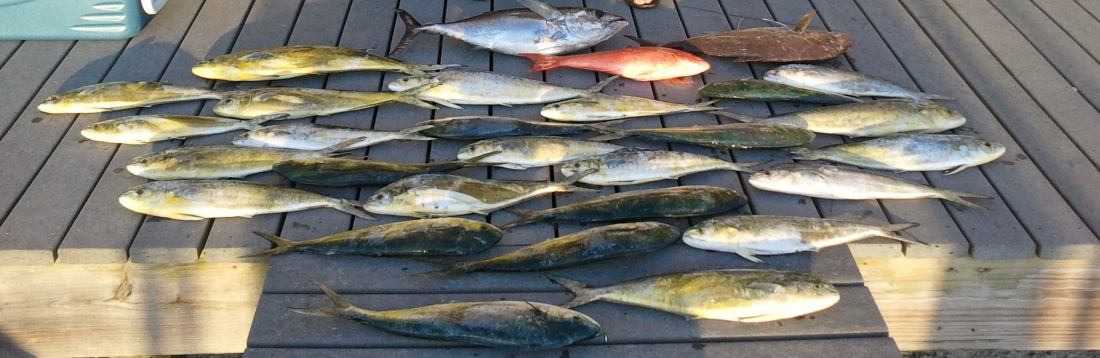 what lures to use for dolphin-fishing-4-13-11-john-soh-jpg