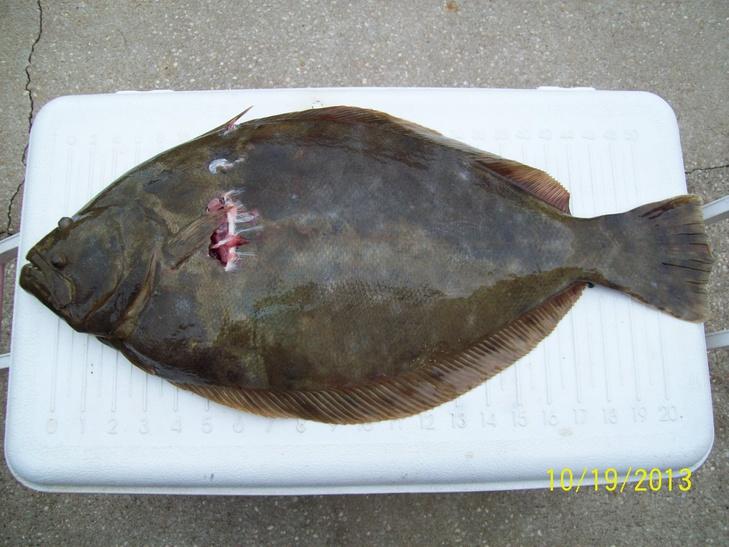 New Flounder Light Give Away-fldr-srs-10-19-13-jpg