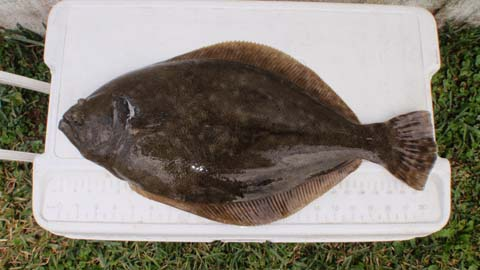 New Flounder Light Give Away-flounder-21-inch-11-18-2010-jpg