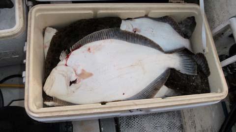 New Flounder Light Give Away-flounder-22-2011-jpg