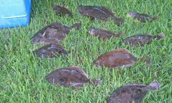 6/31/11 trip-flounder-6-31-11-jpg