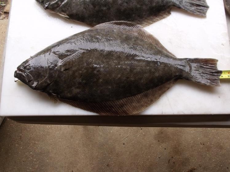 July 03 Late Report-flounder-7-03-011-jpg
