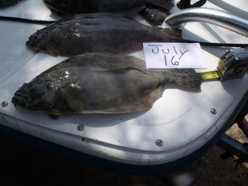 July 16-flounder-7-16-003-jpg