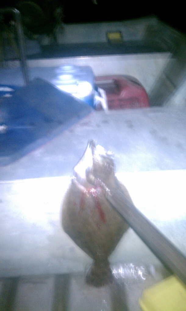 Trip 7/6/11-flounder-gigged-2-jpg