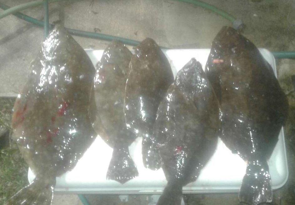 Sarday nite - Sundy morning PSJB-flounder1-jpg