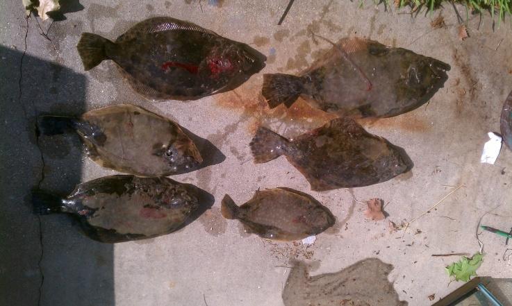 Trip 7/6/11-flounders-7-6-11-jpg