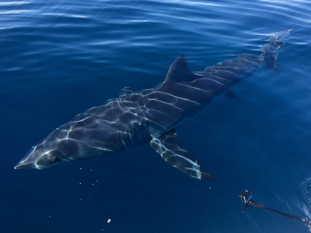 1/24 Spearing Wahoo and Big Mako - Freediving-fullsizerender-3-jpg
