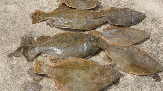 few flounder-gigs1-jpg