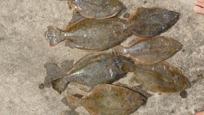 few flounder-gigs2-jpg