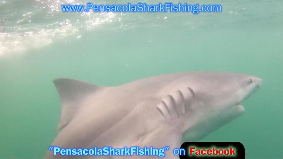 Fat Jax Report (Pics/Video)-grabbed-frame-121-jpg