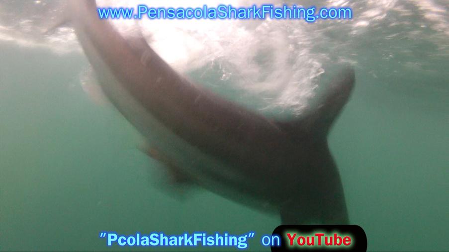 Fat Jax Report (Pics/Video)-grabbed-frame-129-jpg