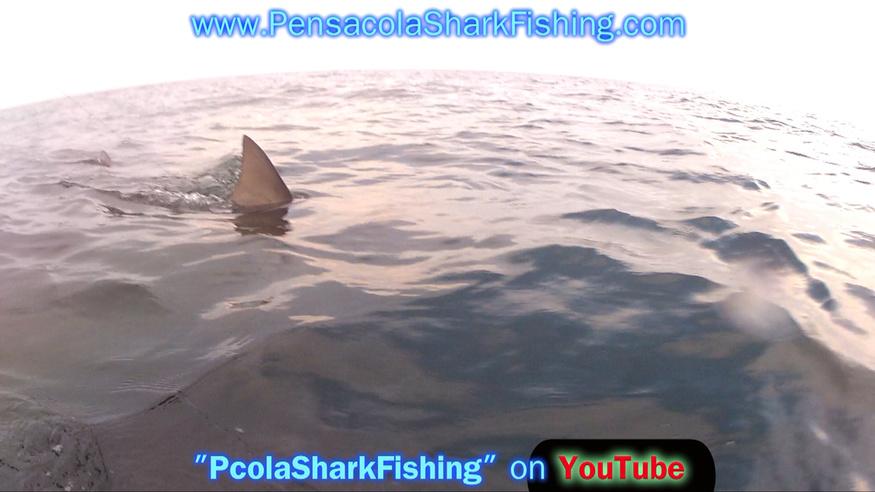 Fat Jax 6/20/14 Report (Bull Shark Beatdown - Who beat Who)-grabbed-frame-80-jpg