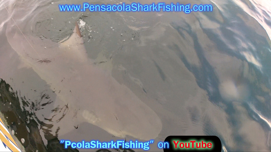 Fat Jax 6/20/14 Report (Bull Shark Beatdown - Who beat Who)-grabbed-frame-82-jpg