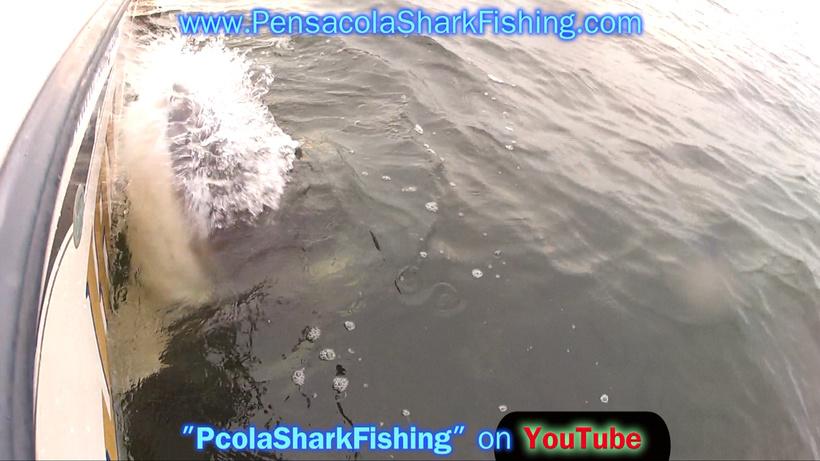 Fat Jax 6/20/14 Report (Bull Shark Beatdown - Who beat Who)-grabbed-frame-83-jpg