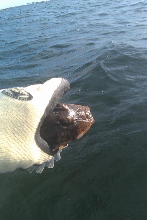 gremlin fish?-gremlin-jpg