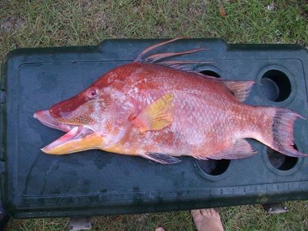 pictest-hog-fish-jpg