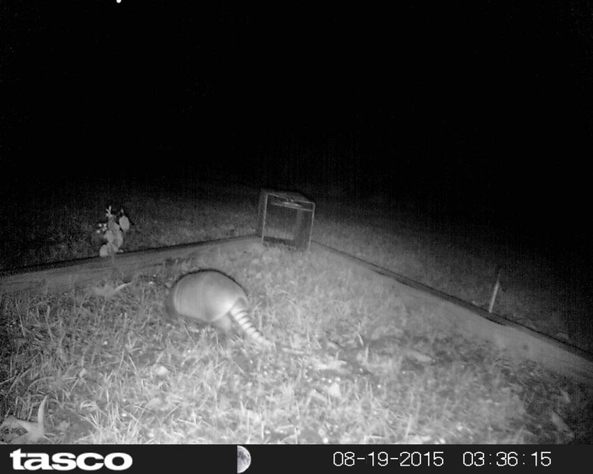 How to catch an armadillo-hunt0018-jpg