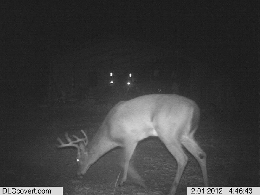 Deer Test-im000010-jpg