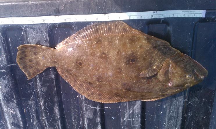 Flounder!-imag0097-jpg