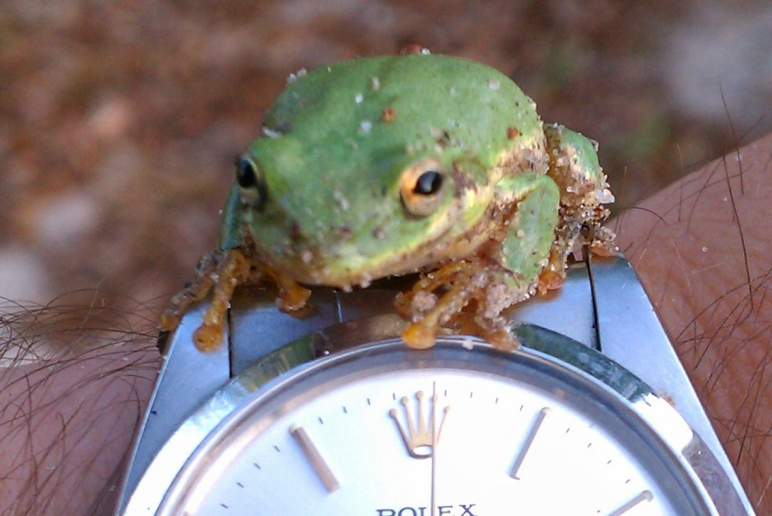 Are you feelin froggy?-imag0186-jpg