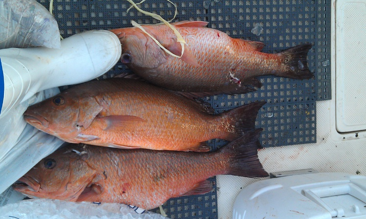 Whacked and stacked: Lionfish, AJ & black snapper-imag0192-jpg