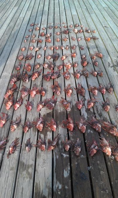 Lionfish harvest from natural bottom 3/22-imag0212-jpg