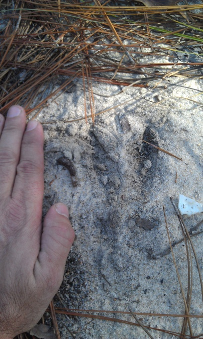 can you get a good estimate of the size of a deer just by track?-imag0462-jpg
