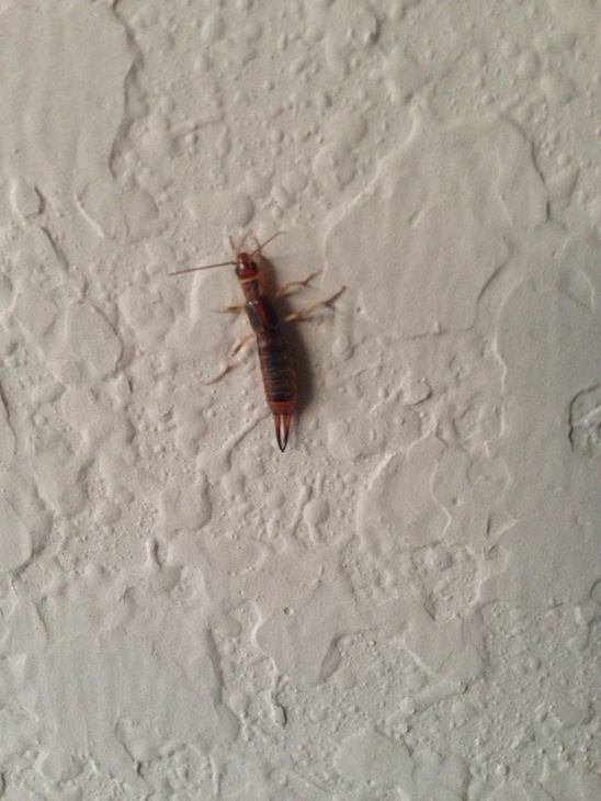 What Kind Of Bug Is This Image 1026685458 Jpg