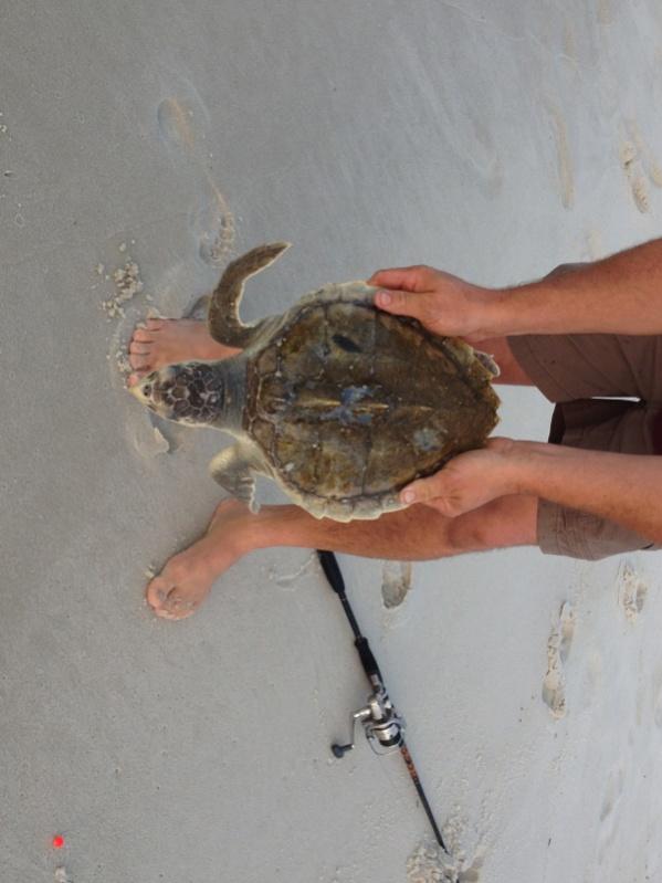Sea turtles-image-1655684032-jpg